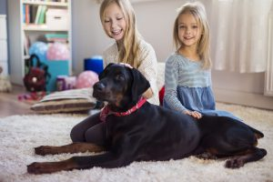 Professional Carpet Cleaning and Upholstery Cleaning - Kate's Cleaning Services